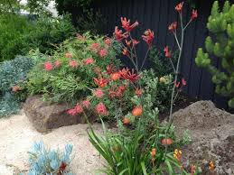 Bush Rock Garden Edging Marvellous Rock Gardens Australia Contemporary Best Inspiration