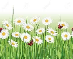 flower chamomile seamless border white seamless background