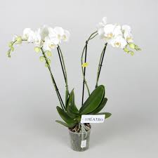 Office Plant Decoration Kl by Oz Planten Offer Highlight