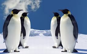 download free hd penguin wallpaper for windows oviyahdwallpaper