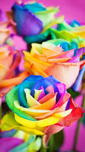 Colorful Roses Colorful Roses Wallpaper Free Iphone Wallpapers