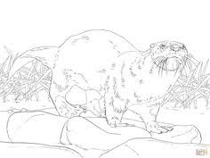 north american river otter coloring coloring pages