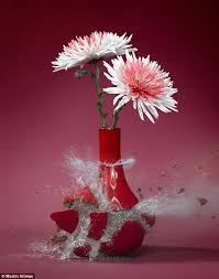 Pictures Of Vases With Flowers Martin Klimas Uses High Speed Photography To Captures The Moment