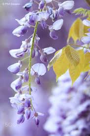 Purple Mood 95 Best Purple Yellow Mood Images On Pinterest Colors Yellow
