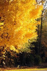 Autumn Colors 15 Places To See Spectacular Autumn Foliage In Alabama Al Com