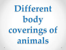 body coverings of animals