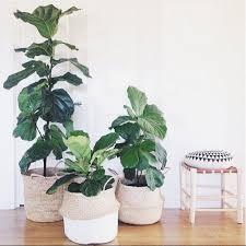 15 indoor plant display ideas that are borderline genius