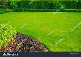 green grass backyard design fres hoom 1000 images about home