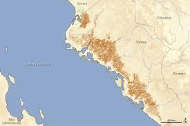 sinaloa mexico map cold weather damages crops in sinaloa mexico hazards
