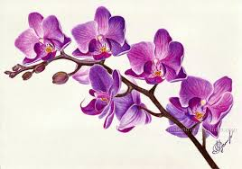 purple orchids purple orchid by rustamova on deviantart