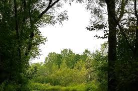 Wisconsin vegetaion images Fond du lac trails trail maps jpg