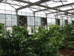 ventilation fans for greenhouses the importance of proper greenhouse ventilation the landscape market