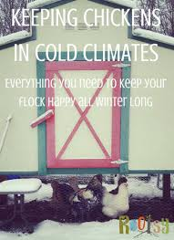 keeping chickens in cold climates rootsy network