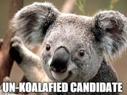 Koala Meme - koala meme generator imgflip