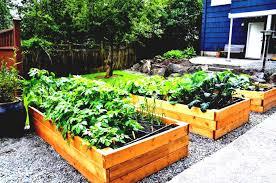 free vegetable garden design layout ideas landscaping glamorous