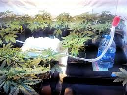 chambre de culture cannabis fait maison placard cannabis fait maison cannabis kit chambre de culture fait