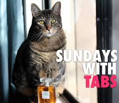 sundays with tabs the cat makeup and beauty blog mascot vol 174