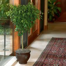 Home Interior Plants by 15 In House Plants Indoor Plants The Home Depot