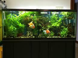 aquarium design exle freshwater aquarium plant care substrate ferts co2 lighting