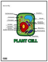 plant cell coloring diagram worksheet answers science cells