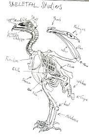 turkey vulture the ebestiary