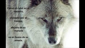 imagenes de fondo de pantalla lobos maxresdefault claudia pinterest imagenes de lobos para fondo