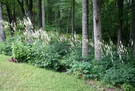native plants in landscape management native new england plants new england habitat gardening blog