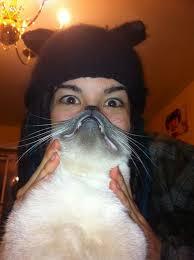 Cat Beard Meme - cat beards a new meme on the internet the wondrous
