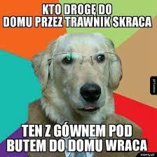lalka streszczenie pieseł mądrości memy pl