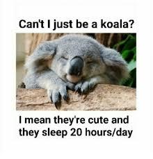 Koala Meme - 25 best memes about sleep koala sleep koala memes