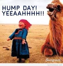 Happy Hump Day Memes - funny happy hump day sayings pictures and cartoons