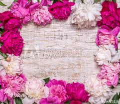 where to buy peonies frame of peonies on a wooden background floral design pink and