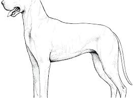 dog coloring pages for toddlers great dane coloring pages great dogs coloring pages coloring pages