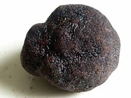 comment cuisiner les truffes noires file truffe du périgord jpg wikimedia commons
