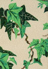 170 best ivy art ill images on pinterest ivy branches and