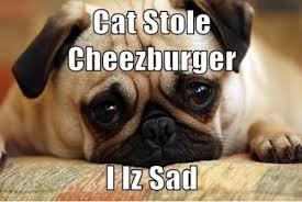 Meme Cheezburger - cheezburger memes image memes at relatably com