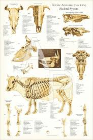 Anatomy Of A Cats Eye 9 Best Dog Anatomy Images On Pinterest