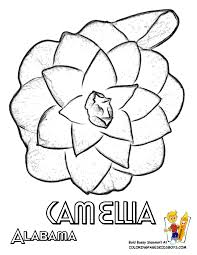 states flower coloring sheets alabama georgia free flower