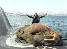 interesting photo of the day massive walrus naps on submarine hatch