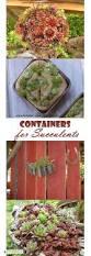 7419 best sensational succulents images on pinterest succulent