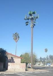 take a look at america s least convincing cell phone tower trees