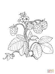 red strawberries coloring page free printable coloring pages
