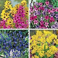 spring rock garden flower power fundraising