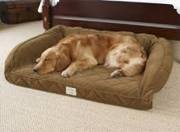 Ll Bean Dog Bed Stella Looks Good On Her Llbean Dog Bed Best Friends Intended