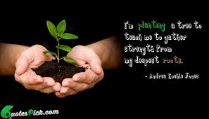 i am planting a tree quote by andrea koehle jones quotespick