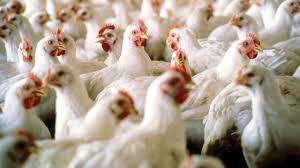benefits of nigerian poultry livestock expo u0027 u2014 business u2014 the
