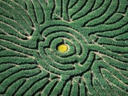 Denver Botanic Gardens Corn Maze Aerial Of Corn Maze In Denver Botanic Gardens Denver Usa 18x24
