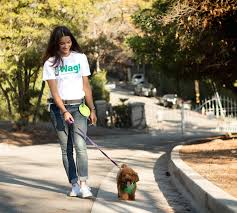 dog walking start up wag quickly grows from pup to fierce