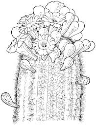 cactus coloring pages coloring page blog