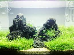 Aquascape Layout Frank U0027s Planted Tank How To Mini Novel The Mini S Returns New